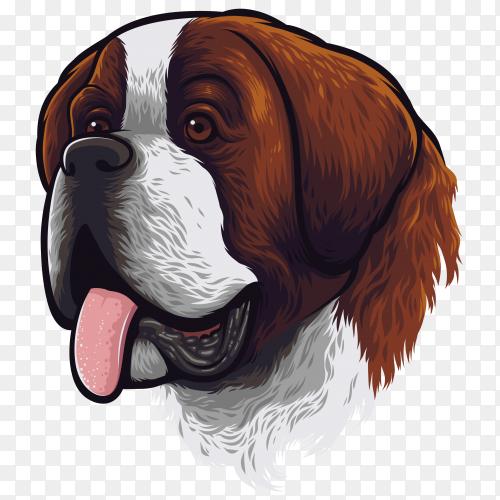 Saint Bernard dog portrait on transparent background PNG