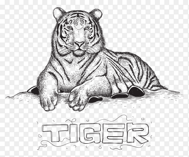 Tiger sitting relaxing, illustration of animal in hand drawing on transparent background PNG