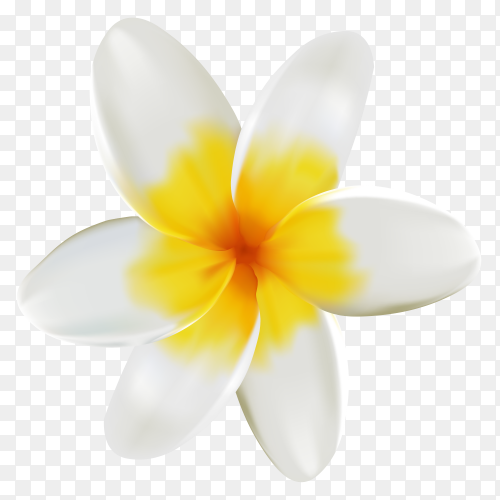 White and yelllow flower isolated on transparent background PNG