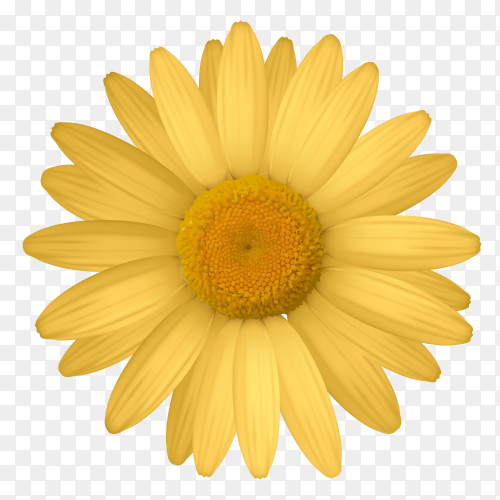 Yellow flower on transparent background PNG