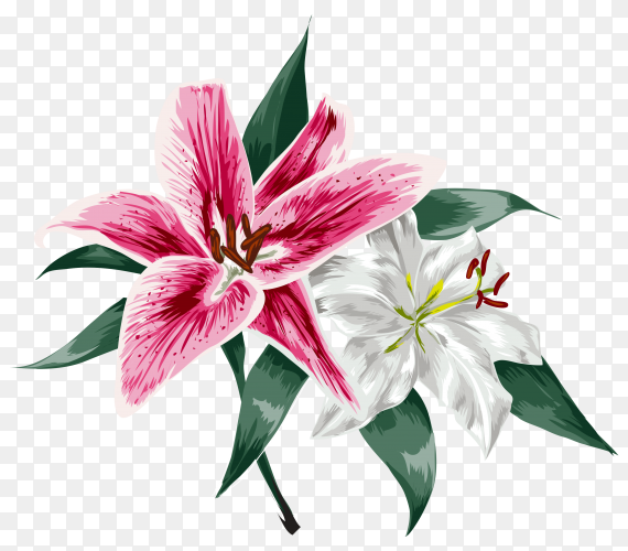 Beautiful pink lily flower. Bouquet of flowers on transparent background PNG