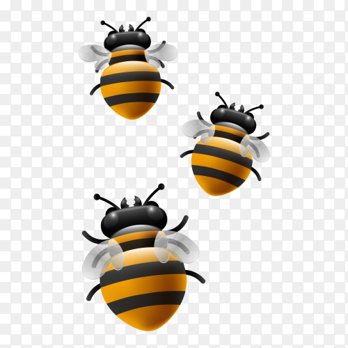 Bee illustration premium vector PNG