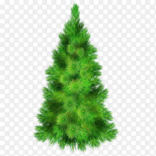 Christmas tree with green branches for decorating the house realistic on transparent background PNG
