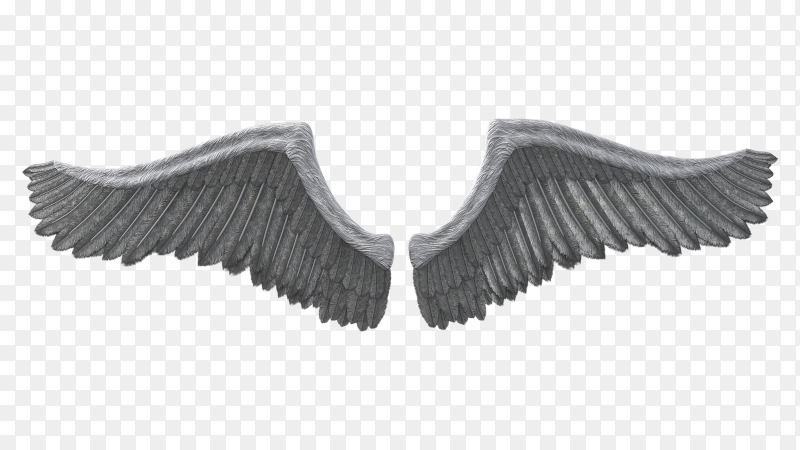 Illustration of gray wings on transparent background PNG