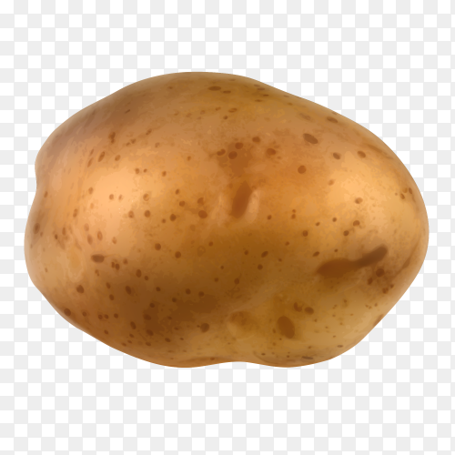 Potato isolated on transparent background PNG