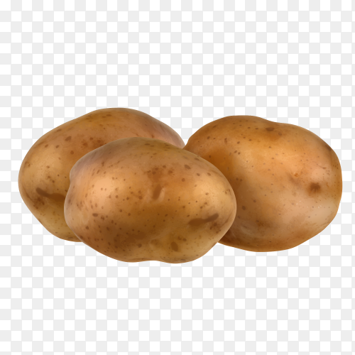Potatoes realistic on transparent background PNG
