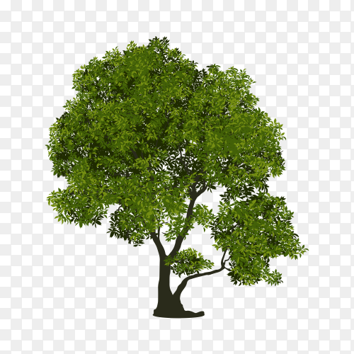 Green Tree isolated premium vector PNG