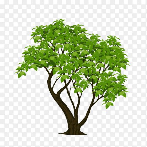 Green tree illustration on transparent PNG