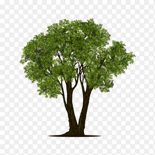 Green tree illustration on transparent background PNG