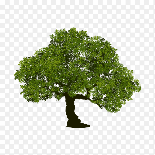 Green tree isolated clipart PNG