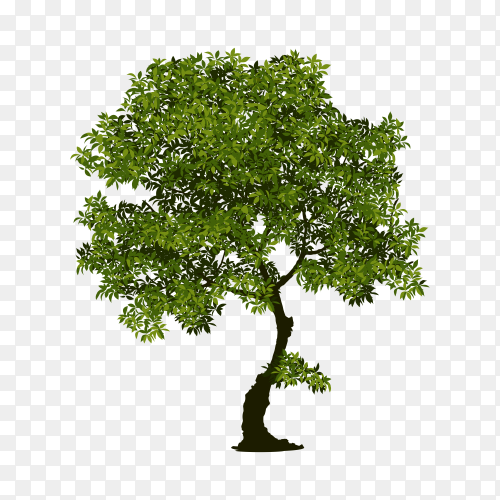 Green tree on transparent background PNG
