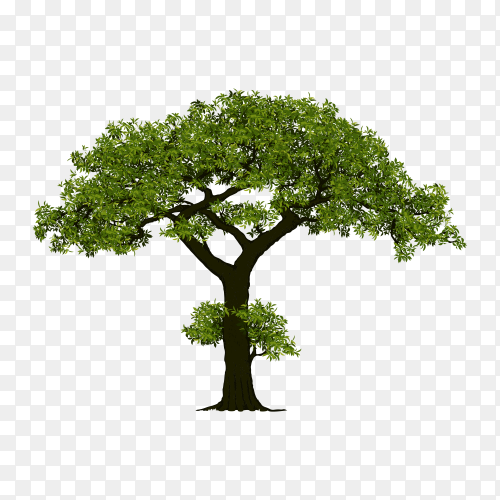 Green tree premium vector PNG