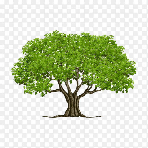 Green tree with flat design on transparent background PNG