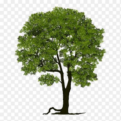 Green tree with flat design premium vector PNG