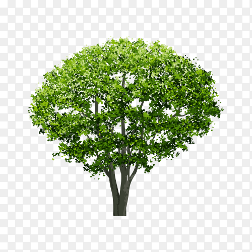 Illustration of green tree on transparent background PNG
