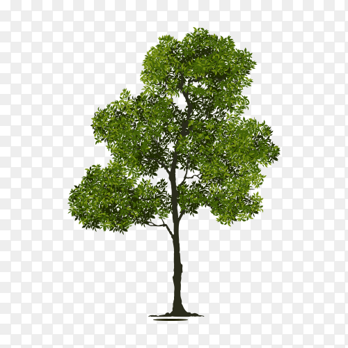 Illustration of tree isolated on transparent background PNG