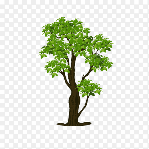 Illustration of tree with green leaves premium vector PNG