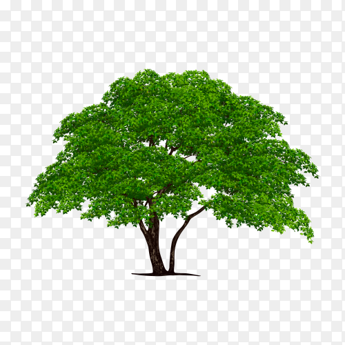 Illustration realistic tree isolated Premium Vector PNG