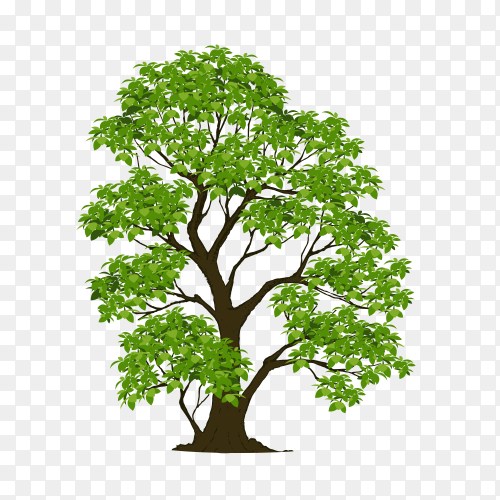 Isolated tree green on transparent PNG