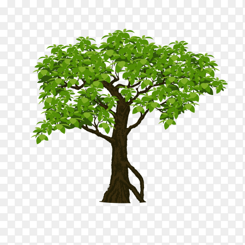 Isolated tree green on transparent background PNG