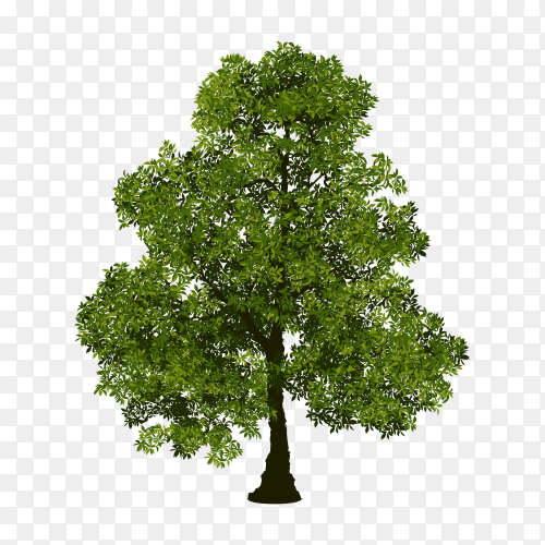 Isolated tree with green leaf on transparent background PNG