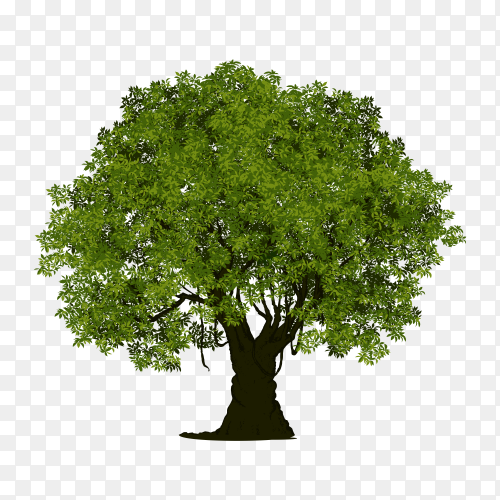 Isolated tree with green leaf premium vector PNG