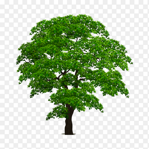 Realistic tree isolated premium vector PNG