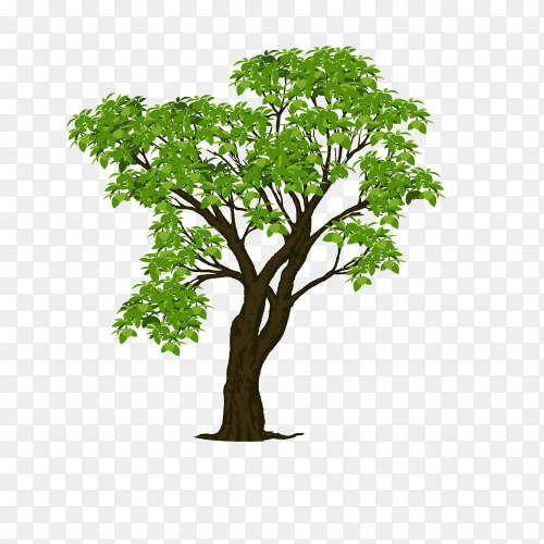 The brown tree with branch and green leaves Clipart PNG