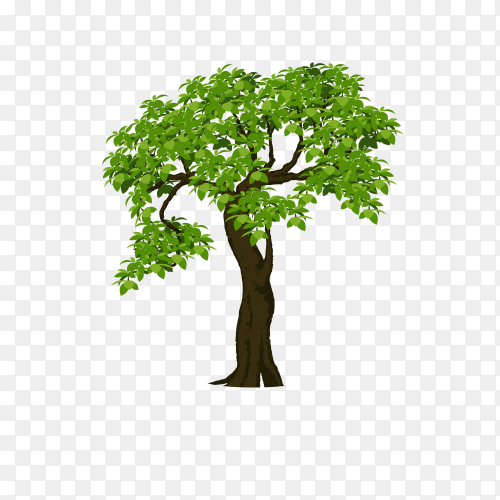 The brown tree with branch and green leaves Vector PNG