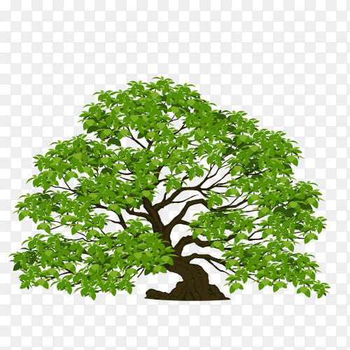 The brown tree with branch and green leaves on transparent PNG