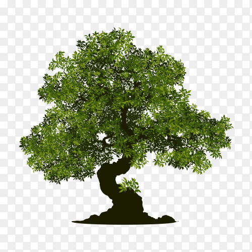 The brown tree with branch and green leaves premium vector PNG