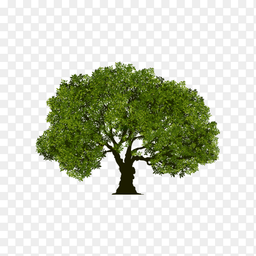 Tree design illustration on transparent background PNG