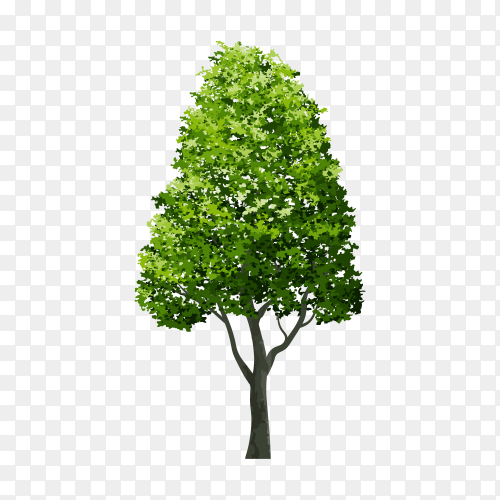 Tree isolated on transparent background PNG