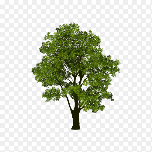Tree with branch and green leaves isolated on transparent background PNG