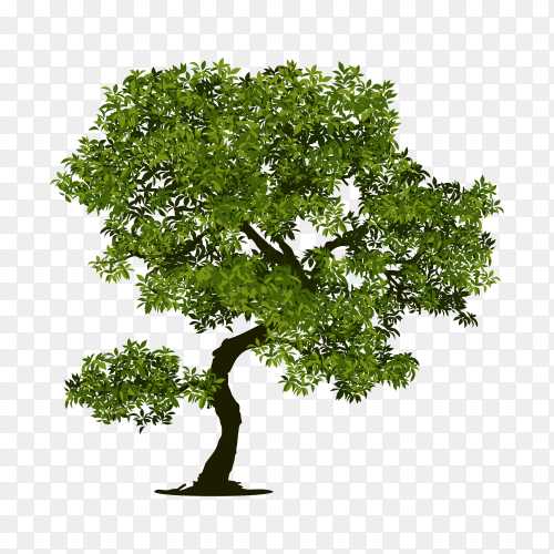 Tree with branch and green leaves isolated premium vector PNG