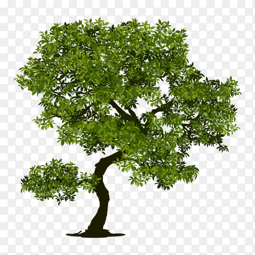 Tree with branch and green leaves on transparent PNG