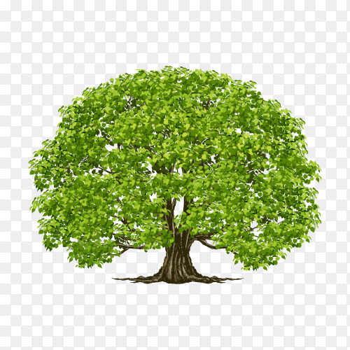 Tree with green leaves isolated premium vector PNG