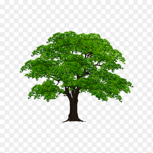 Tree with green leaves on transparent PNG
