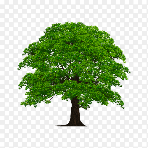 Tree with green leaves premium vector PNG