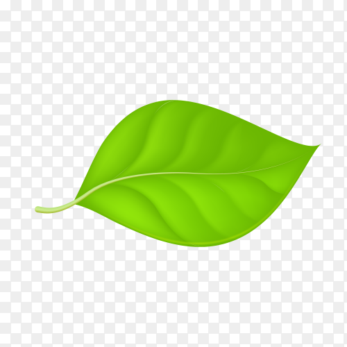 Abstract green leaf on transparent background PNG