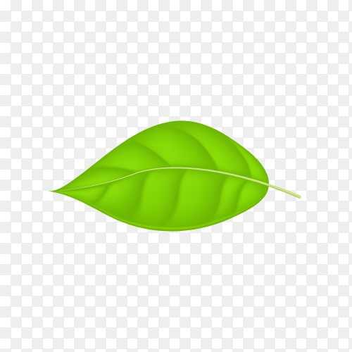 Abstract green leaf premium vector PNG