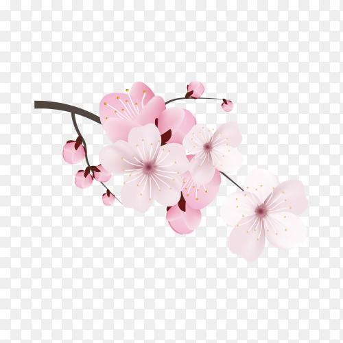 Dark and light pink sakura flower on transparent background PNG