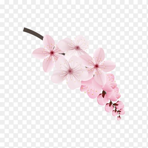 Dark and light pink sakura flower premium vector PNG