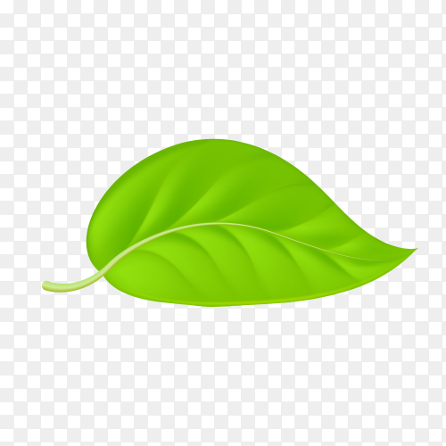 Green leaf isolated on transparent PNG