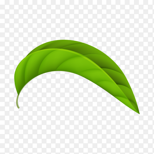 Green leaf isolated premium vector PNG