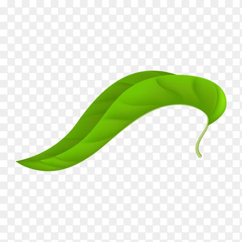 Green leaf on transparent PNG