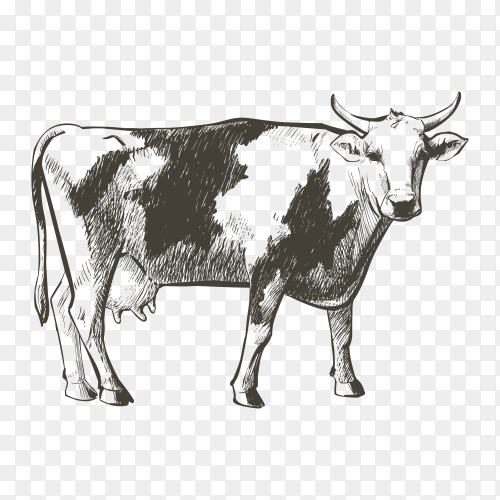 Hand drawn cow on transparent background PNG
