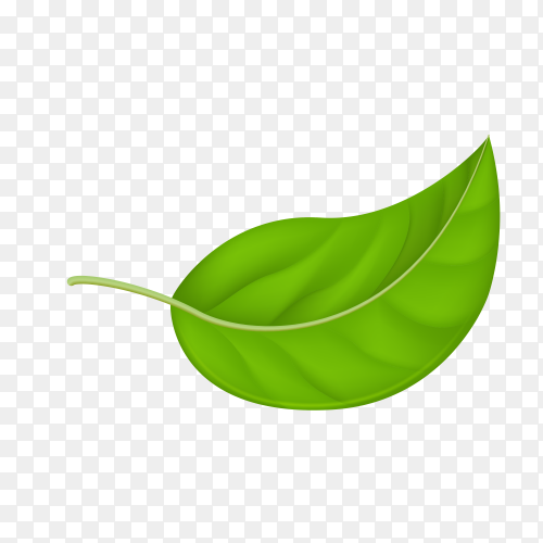 Illustration of abstract green leaf Premium vector PNG