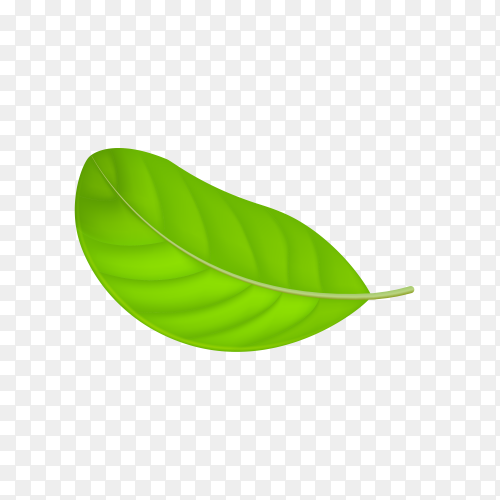 Illustration of abstract green leaf on transparent PNG