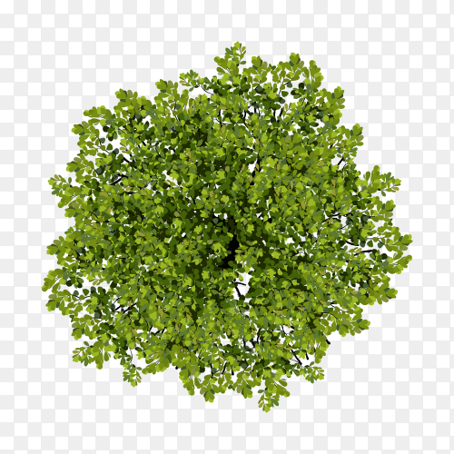 Illustration of tree top view for landscape Premium vector PNG